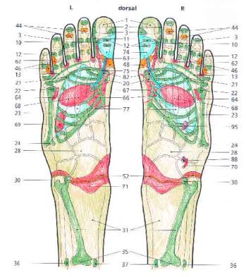 piedi 1